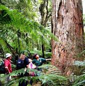 Whirinaki Rainforest Experiences