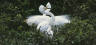 White Heron Sanctuary Tours & Accommodation